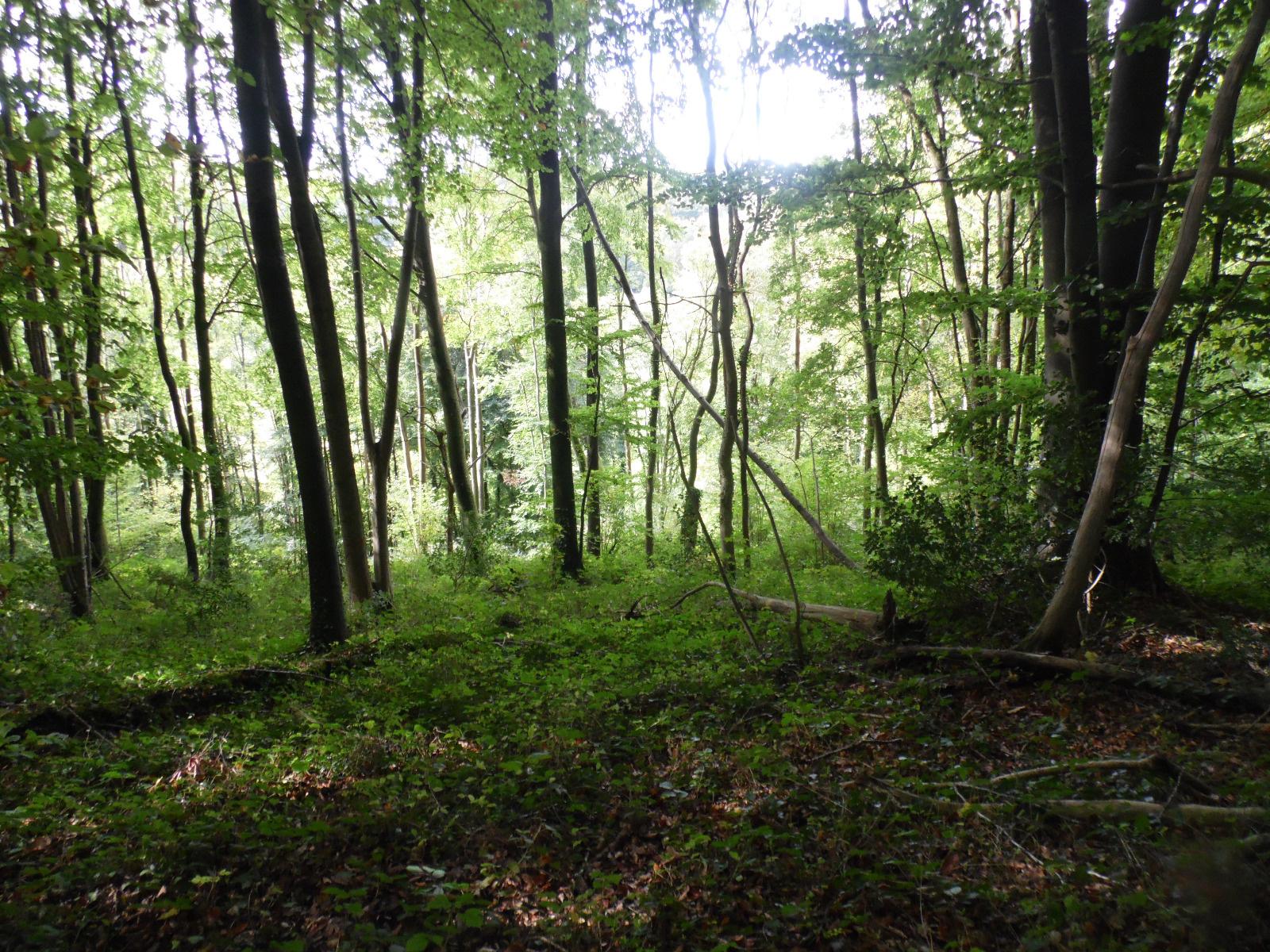vente vente parcelle de bois exploitable 2 hectares pont audemer eure